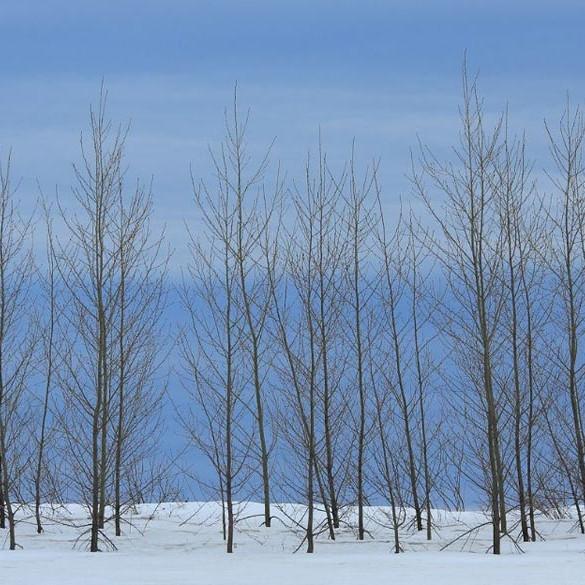 перелесок без листьев в снежном поле