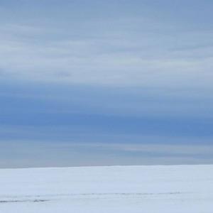 одинокое дерево без листьев на снежном поле