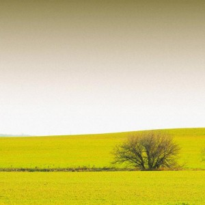 два голых дерева на желтом лугу