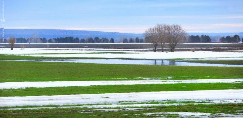 зеленый луг и река в снегу