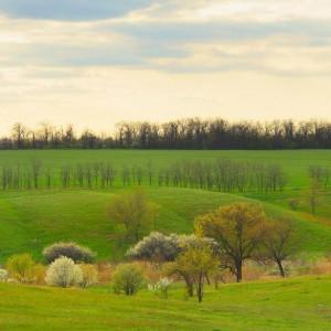 весеннее зеленое поле на закате
