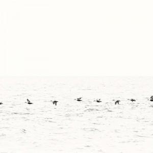 вереница птиц над водой
