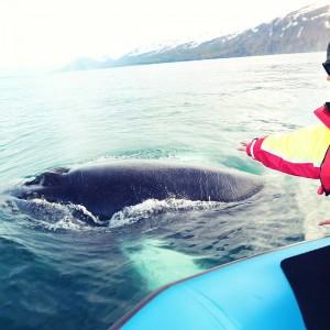 кит близко у лодки