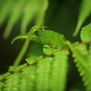 маленькая зеленая змейка