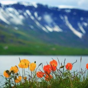 цветы на фоне гор