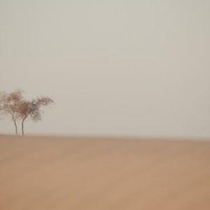дерево в песках пустыни Пакистана. Фото Люся Маратканова.