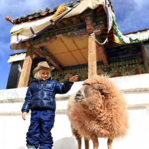 девочка и овца в Тибете. Фото Люся Маратканова
