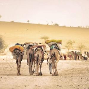 Караван верблюдов в пустыне Тар Индия