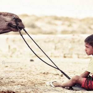 мальчик и верблюд в пустыне Тар