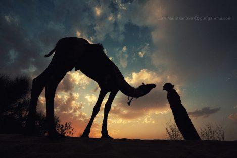 силуэты верблюда и мужчины на фоне закатного неба в пустыне Тар Индия