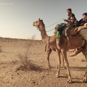 верблюжонок сосет молоко у матери в пустыне Тар