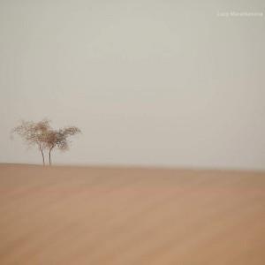 одинокое деревце в песках пустыни Тар