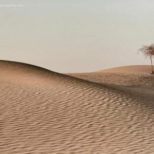 песчаные дюны в пустыне Тар