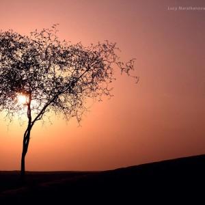 солнце на закате сквозь листву одинокого дерева в пустыне Тар