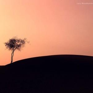 одинокое дерево в песках на закате в пустыне Тар