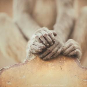руки обезьяны в джайпуре в индии