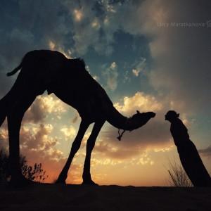 man and camel in thar desert safari in india