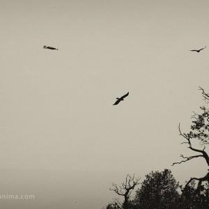 птицы на перевале триунд в дарамсале в индии