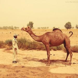 cameleer in thar desert in india