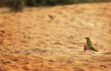 Две птички в песке