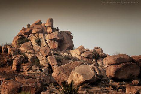 Каменистый пейзаж в Хампи. Фото Люся Маратканова