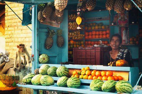 Обезьяна ворует во фруктовой лавке в Хампи. Фото Люси Мараткановой.