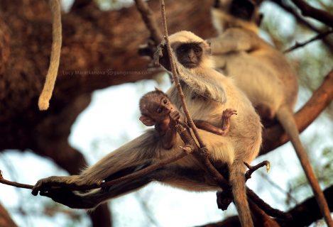 Мать и дитя обезьяны на ветке. Фото Люси Мараткановой.