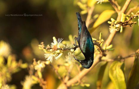 Темная птица вниз головой. Фото Люси Мараткановой.