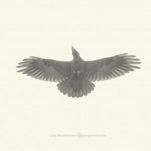 birds of baikal