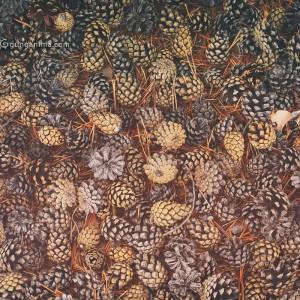 cone carpet in baikal in russia