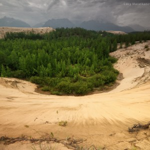forest in desert in russia