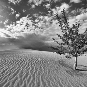 tree in desert in russia