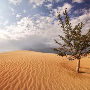 tree in russian desert