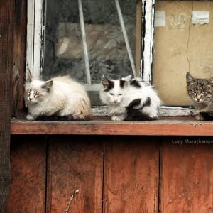 кошки на окошки в россии