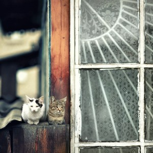 коты на байкале в бурятии