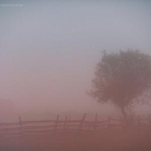 дерево и забор в тумане