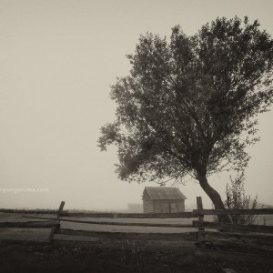 tree in russian village