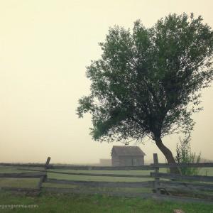 tree in village in baikal