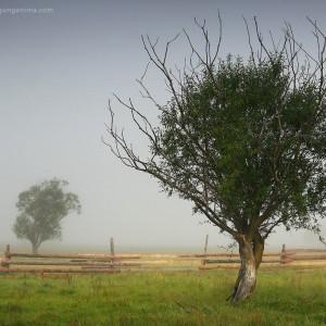 tree in village in baikal in russia