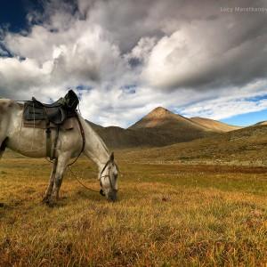 конь на лугу на фоне гор в забайкалье в россии