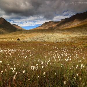 цветущий луг в восточных саянах в россии