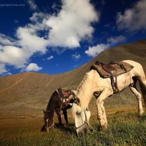 horses on shumak pass in baikal in russia