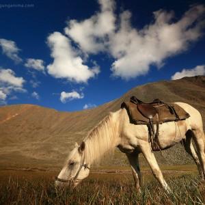 конь пасется на лугу на перевале шумак в забайкалье в россии