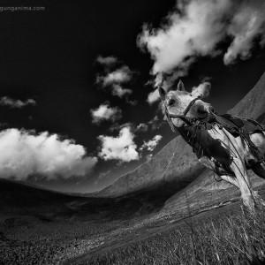черно-белое фото на перевале шумак в забайкалье