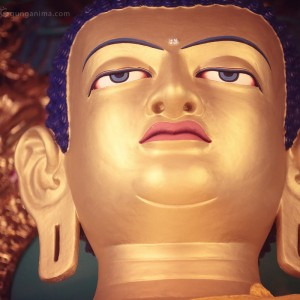 statue of buddha in dharamsala in india