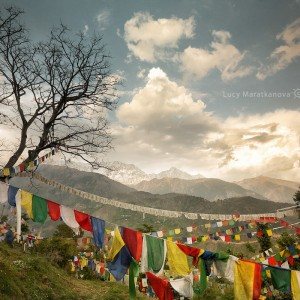 prayer flags in dharamsala in india