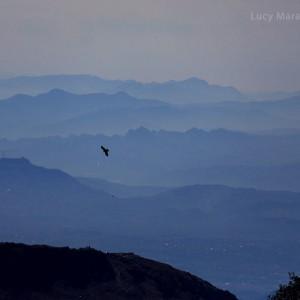 птица парящая в небе над индией