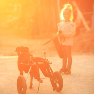 девочка и собака калека в индии в дхарамсале