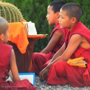 буддистские монахи дети в дарамсале в индии
