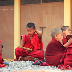 buddhist monks in india in dharamsala